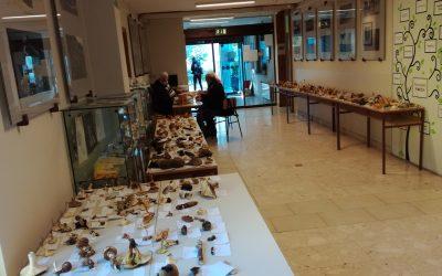 315 različnih gob v avli Dijaškega doma Lizike Jančar
