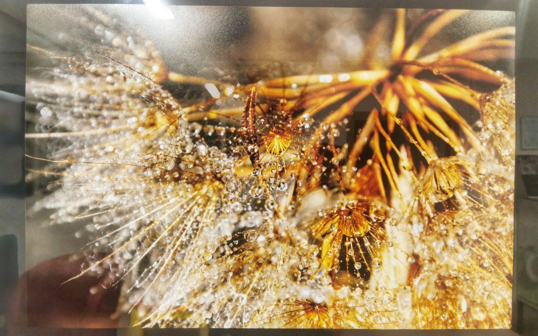 Galerija fotografij iz fotografkse razstave Brede Prešeren