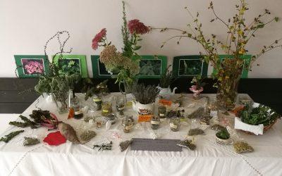 Razstava zdravilnih rastlin